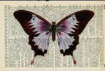 Photography & Art: Flutterbies / Beautiful Butterflies, dazzling dragonflies, lovely ladybirds