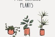 PLANTS / garden, plant life, succulents