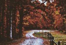 autumn / Fall colours /  Fall Food / Fall Fashion