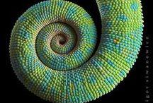 Spirals of nature