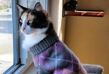 Clothes for Cats / See lots of adorable pictures of cats in clothes because... yes, clothes for cats does exist!