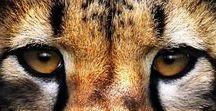 wild / Wild animals,