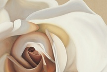 White rose / by Sandy Hall