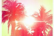 Palms + Pools