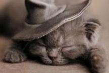 Such cuteness!  / by Megan Clark