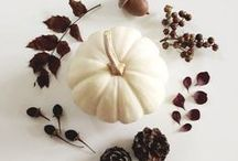 Fall Inspiration / Minimalist and modern fall (autumn) décor, party ideas and fashion. Halloween and Thanksgiving inspiration. A lot of white pumpkins, feathers, wishbones and a bunch of oversized knits.