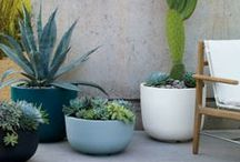 OUTDOOR LIVING / Modern and eclectic patio living and landscaping inspiration. A lot of succulents, concrete, and xeriscaping.