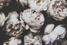 flower / by Mayumi Ikeda