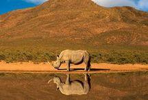 Destino: África