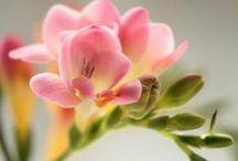 Flowers / I LOVE flowers, All kinds of flowers!