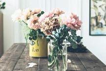 b l o o m / Pretty flowers and foliage :) / by Bailey Ellington