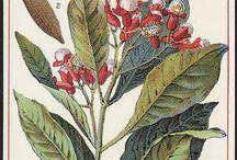 Graphics: botanical