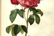 Graphics: flowers