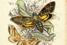 Graphics: butterflies