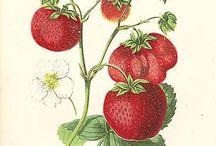 Graphics: fruit and vegis