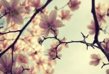 magnolia* & other flowerful moments