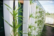 Green Walls and Farm Walls / Adventures in planning, designing and building living green walls/fences for food, energy efficiency and beautifying spaces!
