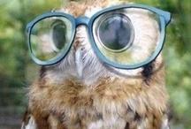 Owls / I Love Owls / by Jammie Burwell