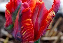 flowers / by Linda Kuzoff