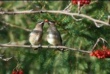 Birds in my garden / by Linda Kuzoff