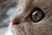 Cats / by Janice Sebourn