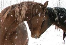 Horses / by Janice Sebourn