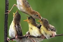 Birds / by Janice Sebourn