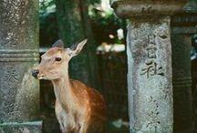 Travel Japan / by RachaelRei