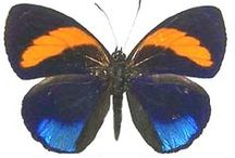Insects: Blue & Orange / Blue and orange insects