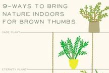 Make it Greener / Green living. Sustainable ideas. Gardening. Plants. Greenery. Outside inside.  / by Katrine van Wyk