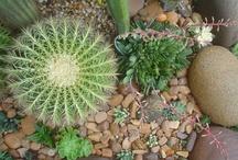 Meu jardim! Cactos e Sculentas / ♥ Estas são fotos do meu pequeno jardim. Adoro plantas, principalmente cactos e suculentas.