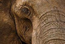 A - Elefantes / ♥ Amo elefantes!♥