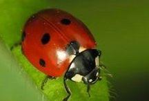 A - Joaninhas - Ladybug / ♥ / by Véra Kartsch