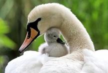 A - Animais/ Mães e filhos / Independente de raça , cor e credo, mães são feras que defendem e mimam suas crias.