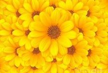 Cor - Amarelo    ❤ Yellow ❤