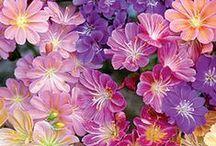 F - Flores... ✿⊱╮ / by Véra Kartsch