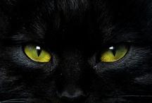 A - Gato Preto