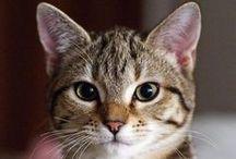 A - Gatos - cara à cara