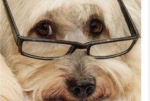 A - Animais de Óculos