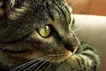 A - Gatos - Perfil / Só de ladinho...Estes gatinhos são lindos D+!