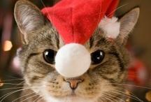 A - Animais e o Natal