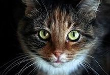 A - Gatos - Hei você aí...