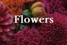 Interests: Flowers / Inspiration, favorite flowers and dreaming of a secret garden.