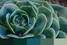 Cactus e suculentas cores! (Paletes)