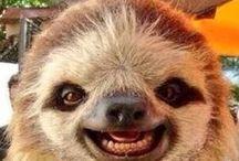 A - Preguiça  (Sloth )