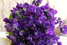 F - Violetas ✿⊱╮