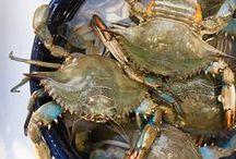 Seafood! / Seafood Soups, Chowders & Salads l Seafood Appetizers l Fried Fish & Fish Tacos l Seafood Sauces www.CarolinaDesigns.com - (800) 368-3825
