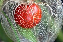 F - Sementes ༺✿༻ Seeds / by Véra Kartsch