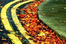 INSPIRATION: Fall Colors / by Alyssa E.