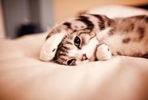 { photo : cat }